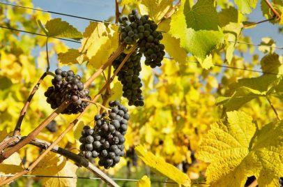 2_O vinicích